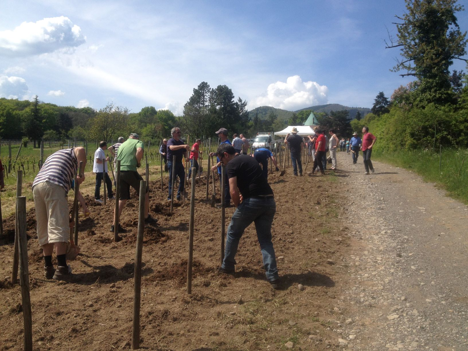 plantation des vignes.JPG
