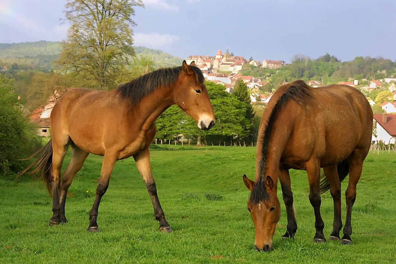 Rgt _ chevaux.jpg