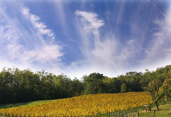 patrimoine - vignes.jpg
