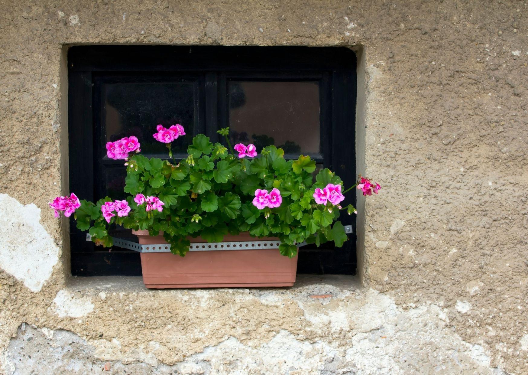 pot de fleur 1.jpg