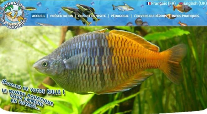 Aquarium-des-Tropiques-pas-cher-Allex-–-Drome-660x365.jpg