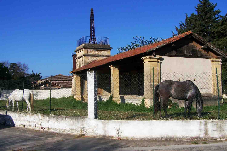 chevaux lavoir 2020-04-05 R.jpg