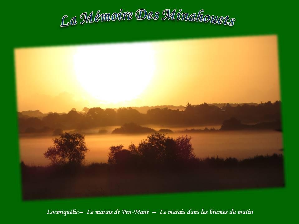 6-Le marais dans les brumes du matin.jpg