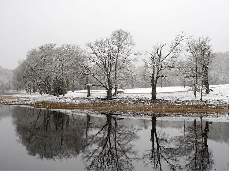 Merle neige-3.JPG