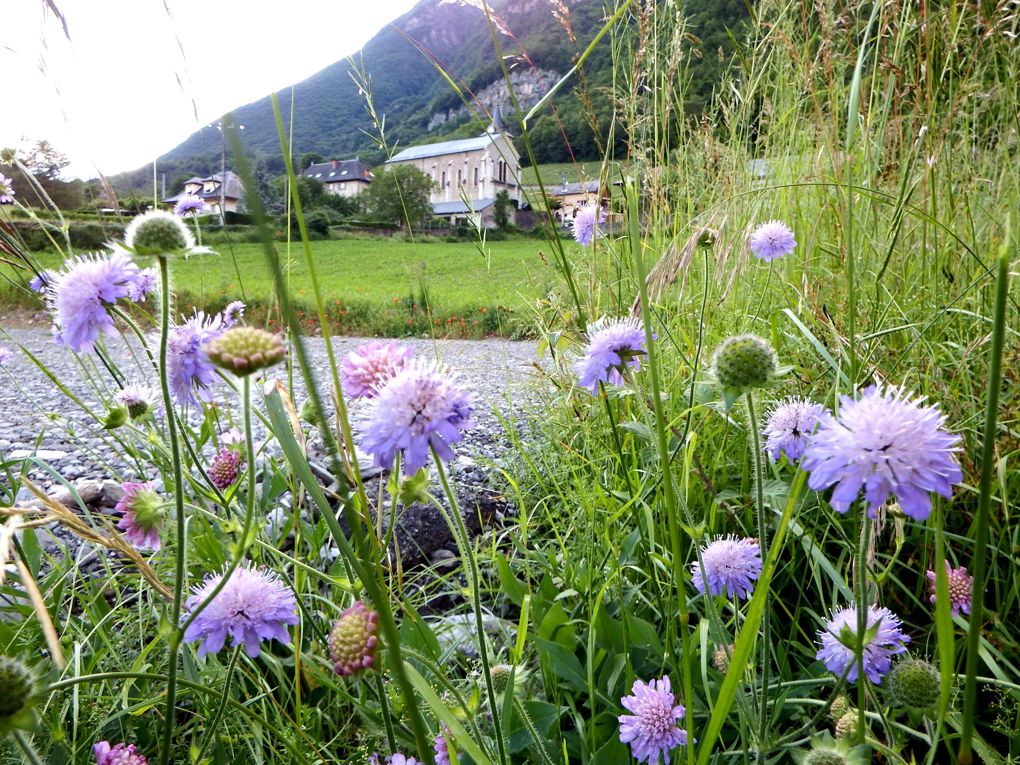 église fleurs