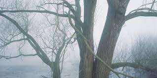Eloge de l_arbre.jpg