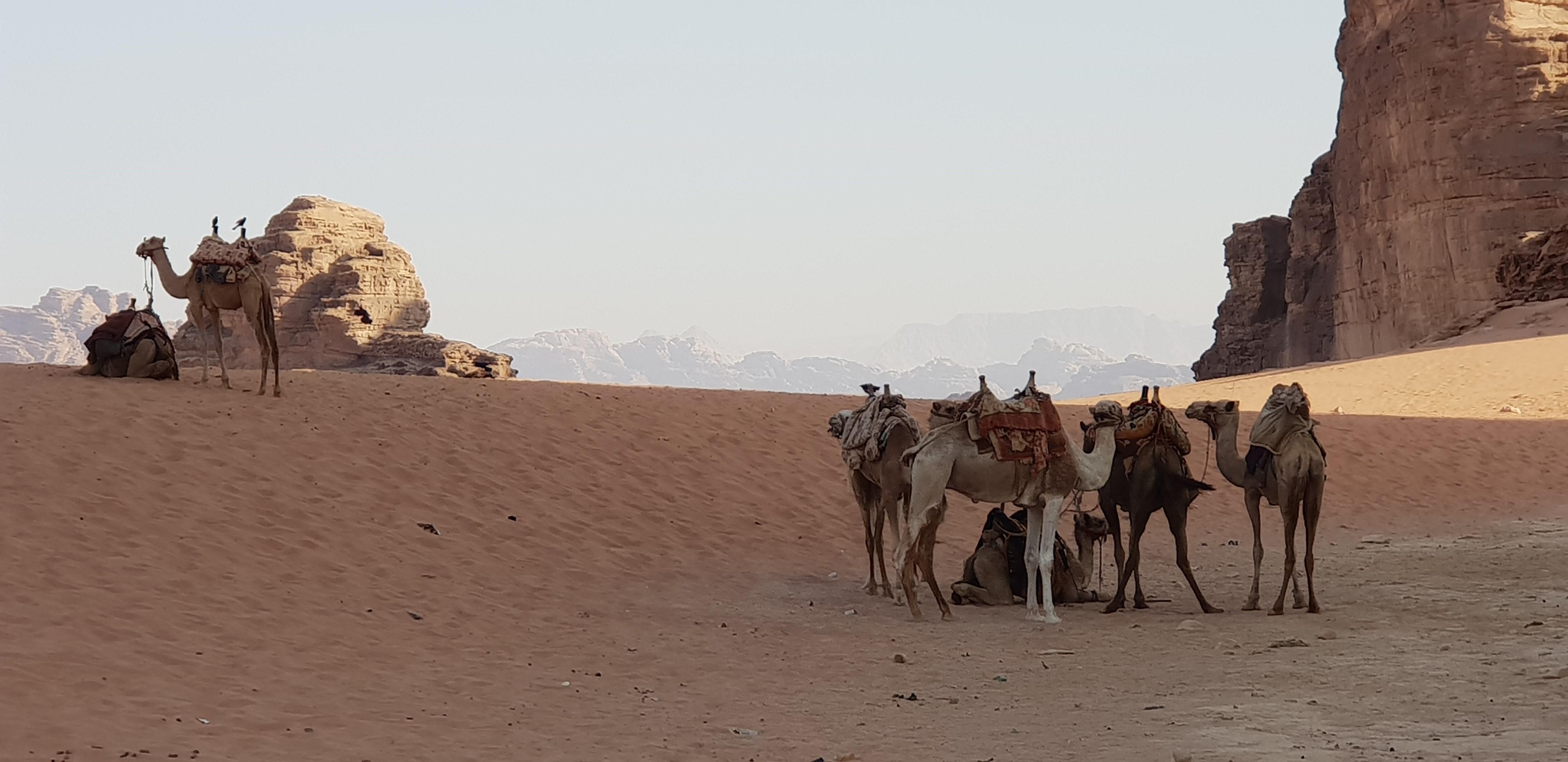 jordanie _5_.jpg