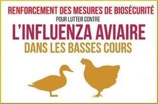 Protection-des-elevages-Elevation-du-niveau-de-risque-de-l-influenza-aviaire-H5N8_large.jpg