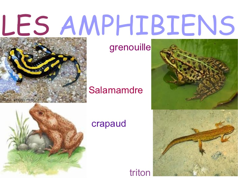2021-04-amphibiens.jpg