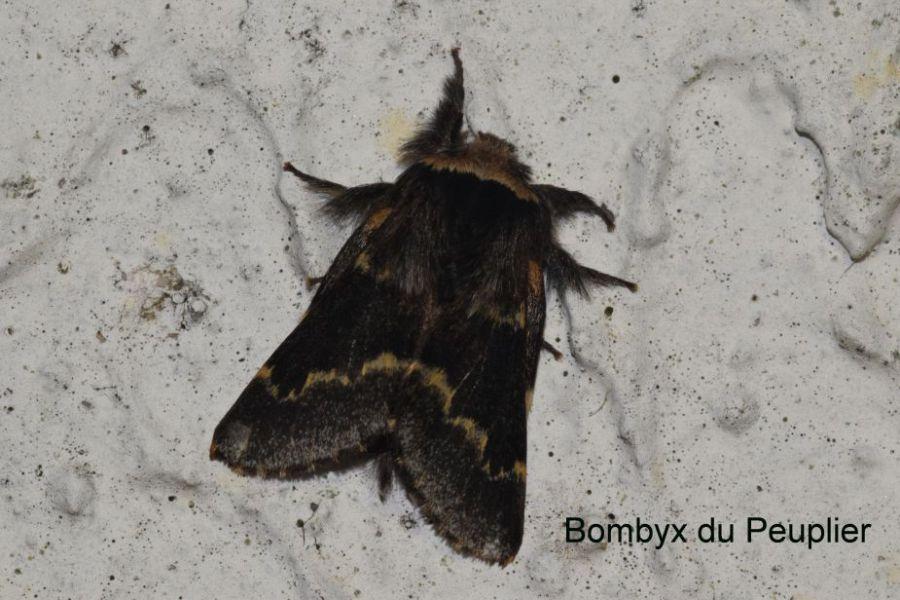 papillon de décembre 3.JPG