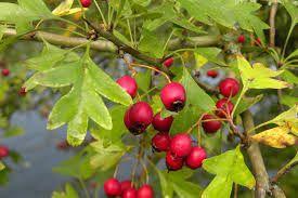 fruits-aubeepine.jpg