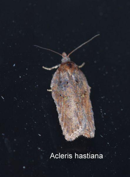 papillon de décembre 6.JPG