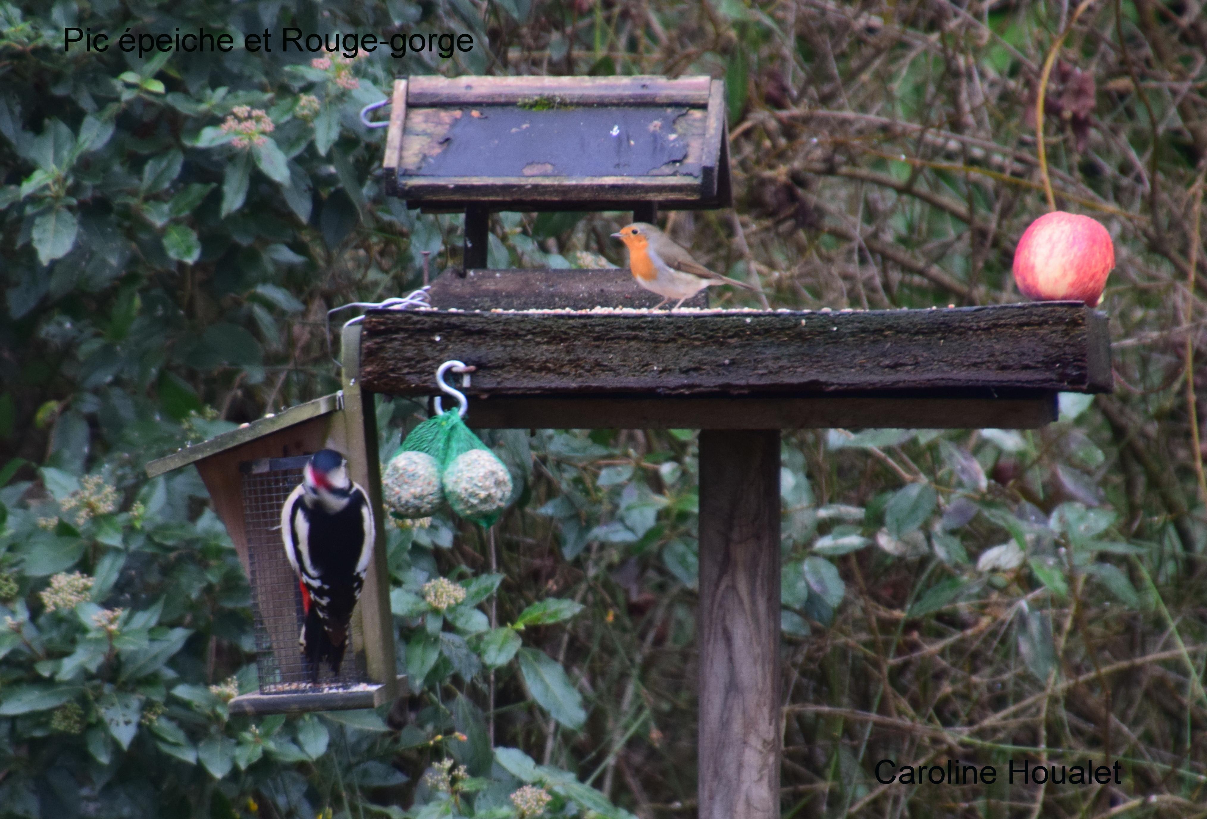 oiseaux de la mangeoire - pic épeiche et rouge gorge ©Caroline HOUALET.JPG