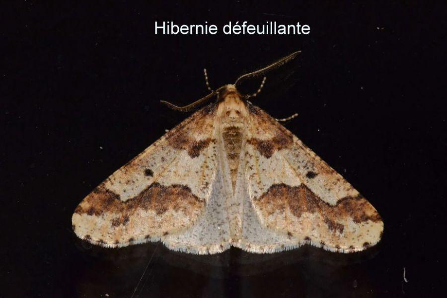 papillon de décembre 1.JPG