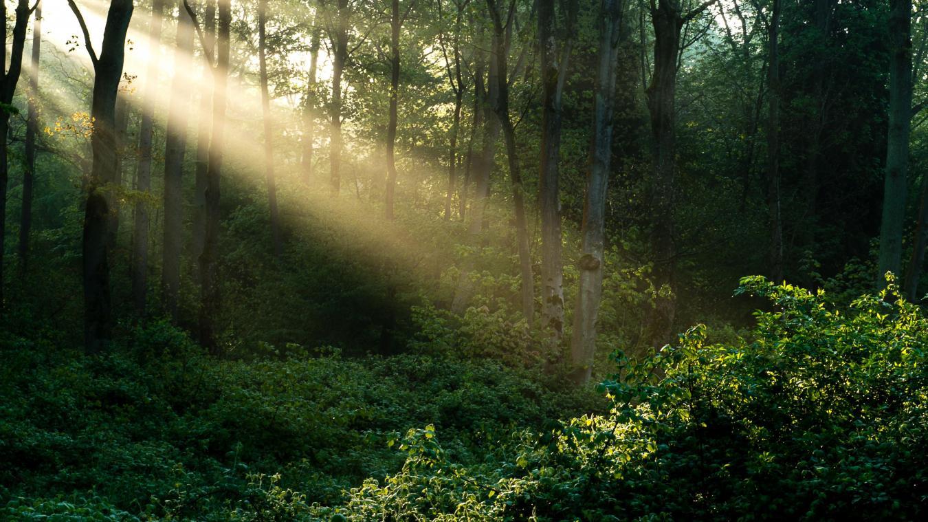 B9722553608Z.1_20200214144219_000_GUCFG7FN9.3-0 forêt.jpg