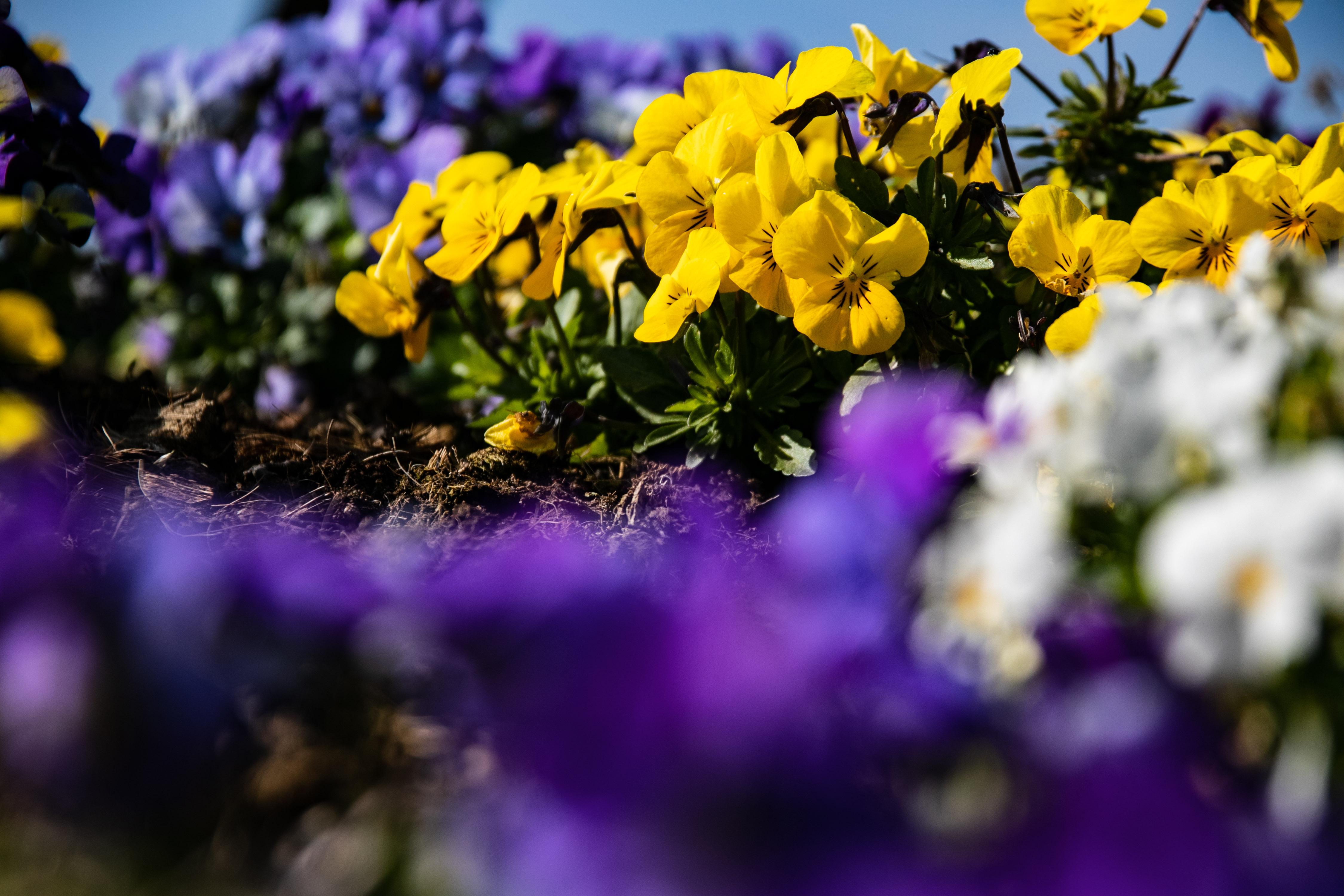 route des andelys depuis le RP coiffueuse fleurs 2 _1 sur 1_.jpg