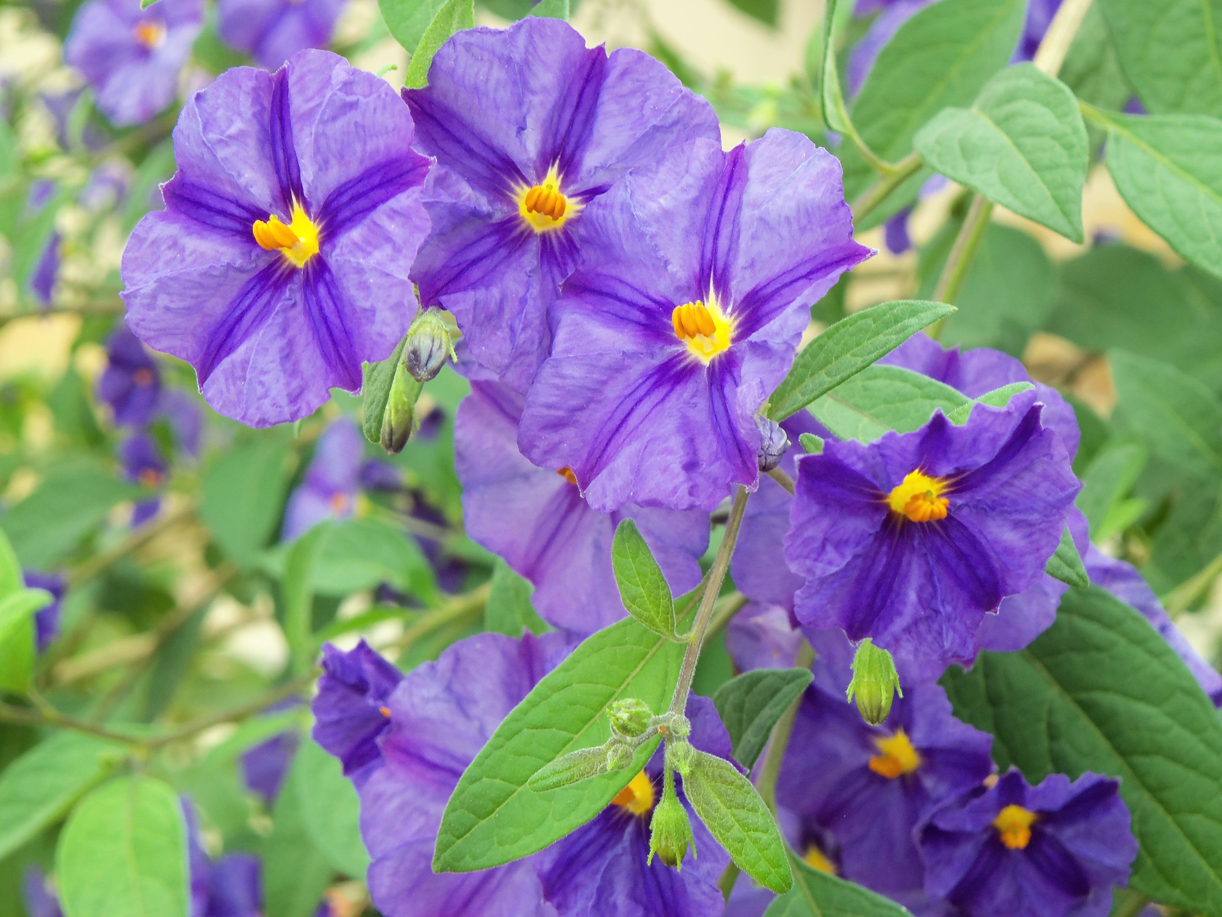 fleurs marie bonzaï 049.JPG