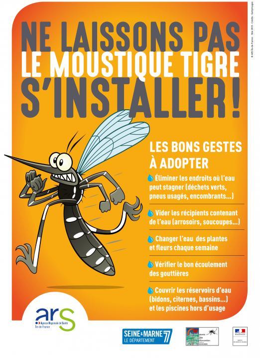 moustique tigre 2.jpg