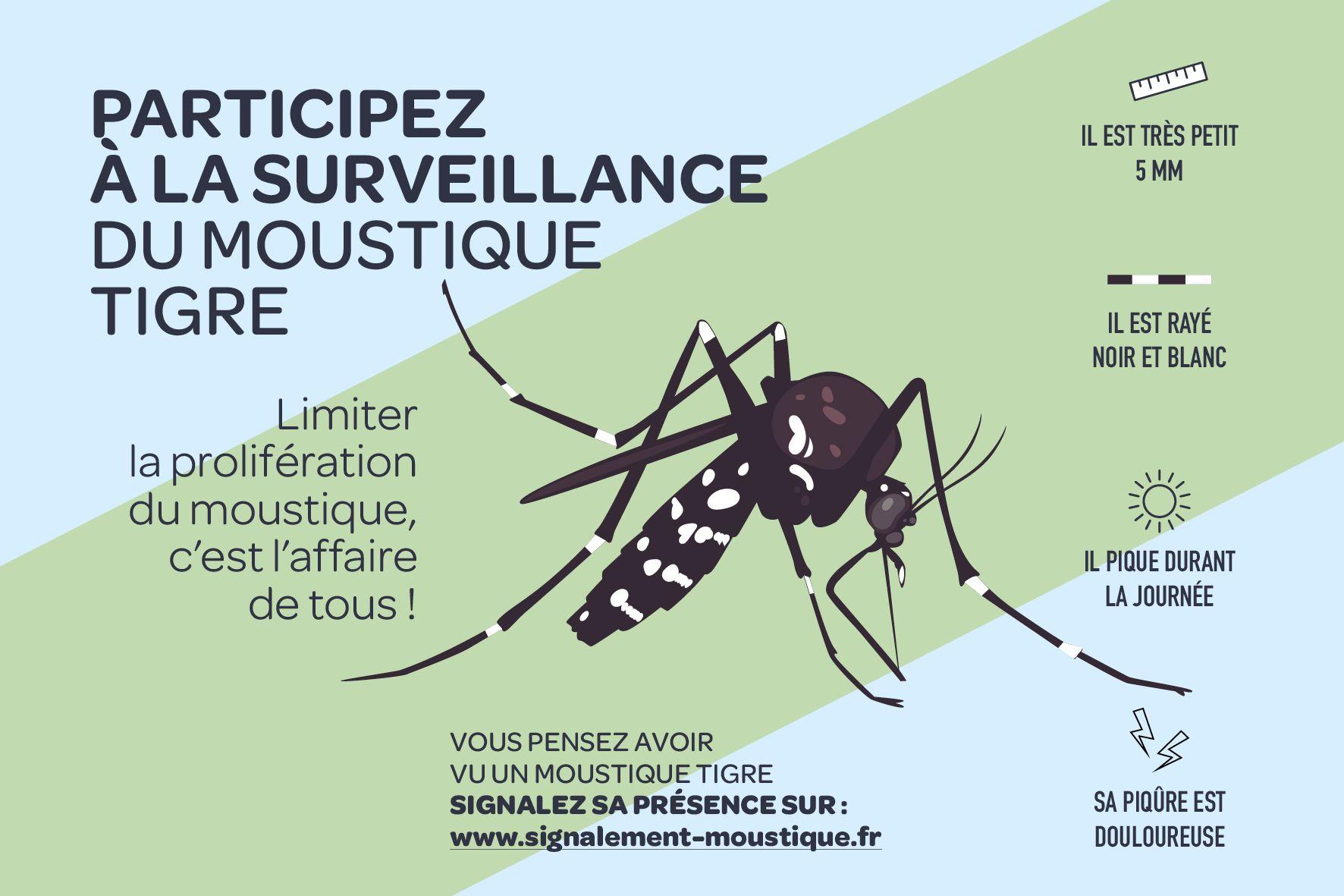 surveilannce moustique tigre.jpg