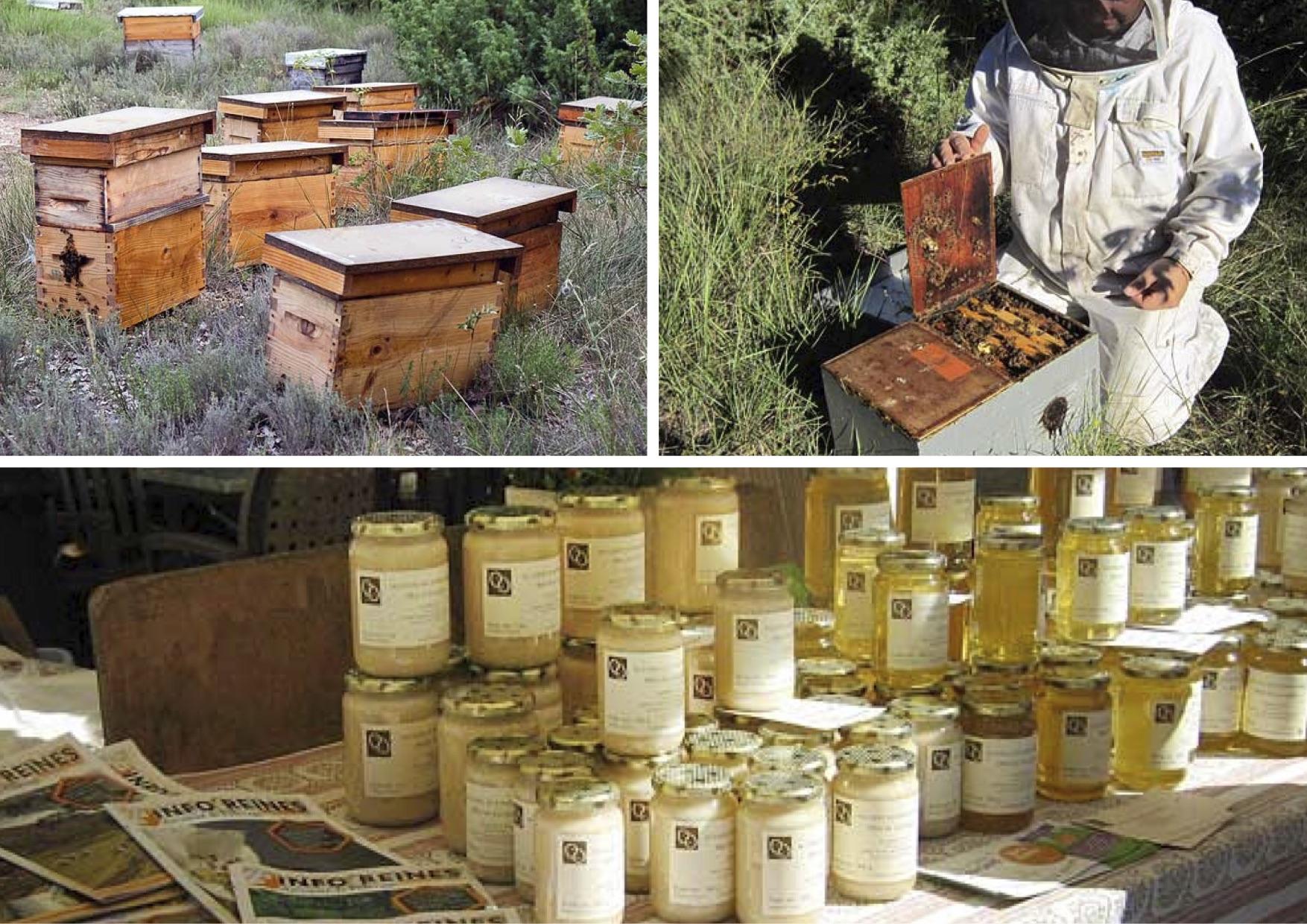 Les ruchers de bonnechere.jpg