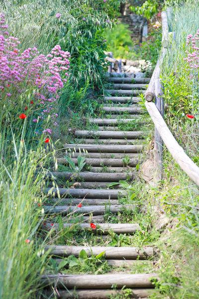 Jardin de Valsaintes 4.jpg