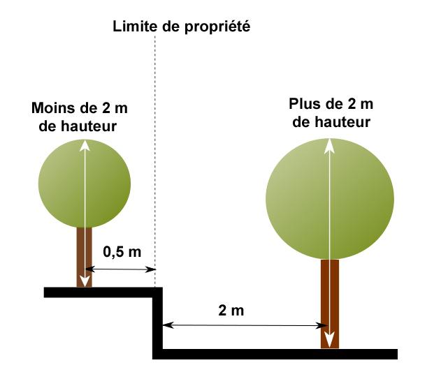 plantation arbres.jpg