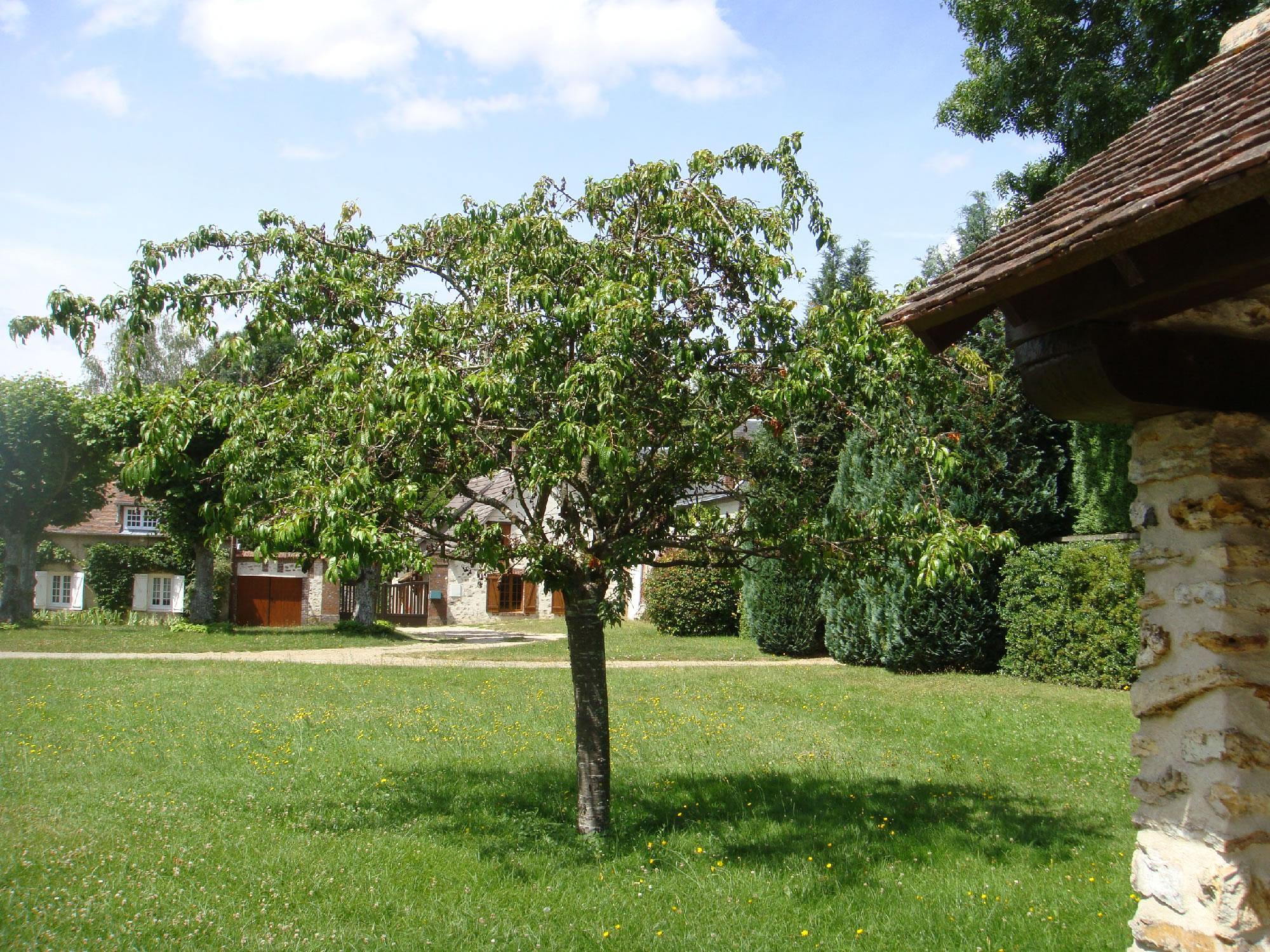 cerisier bicentenaire.jpg