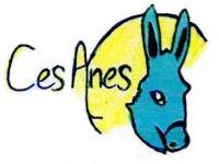 CES_anes.JPG