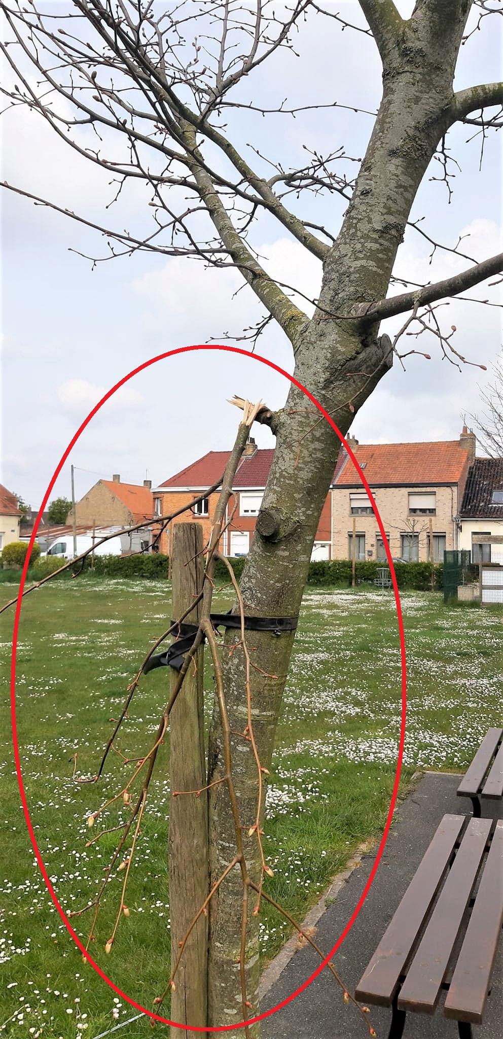 Degradations_arbre_Avril_2021_1.jpg
