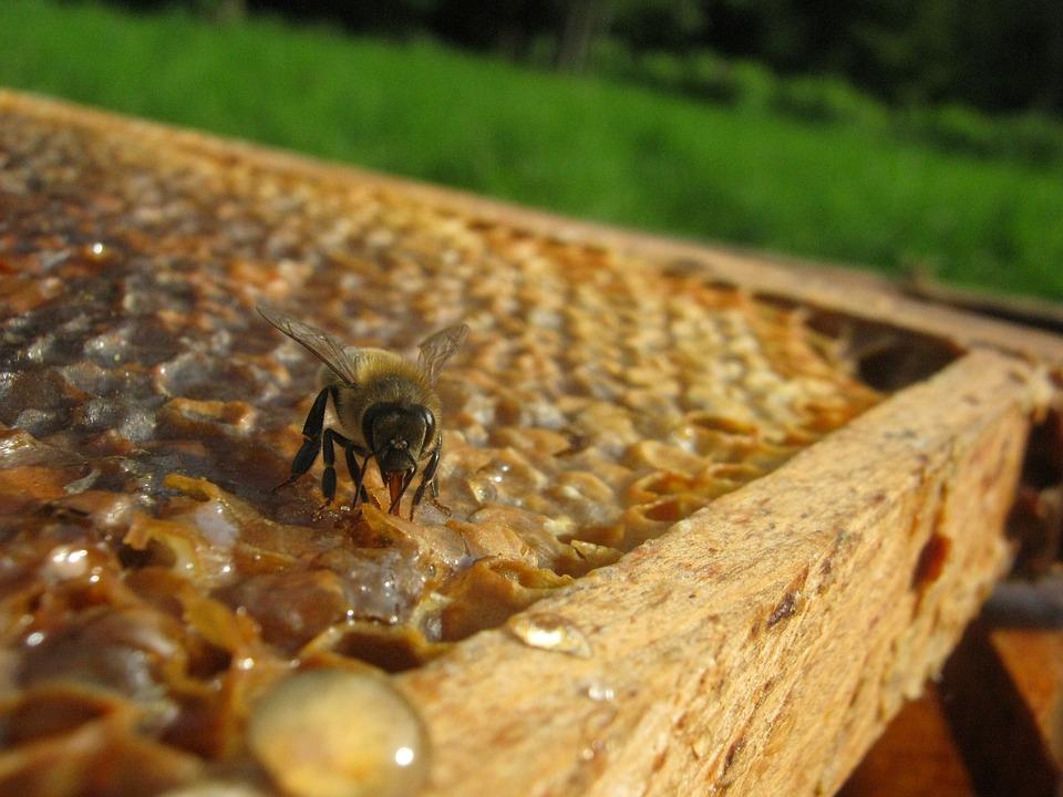 apiculture.jpg