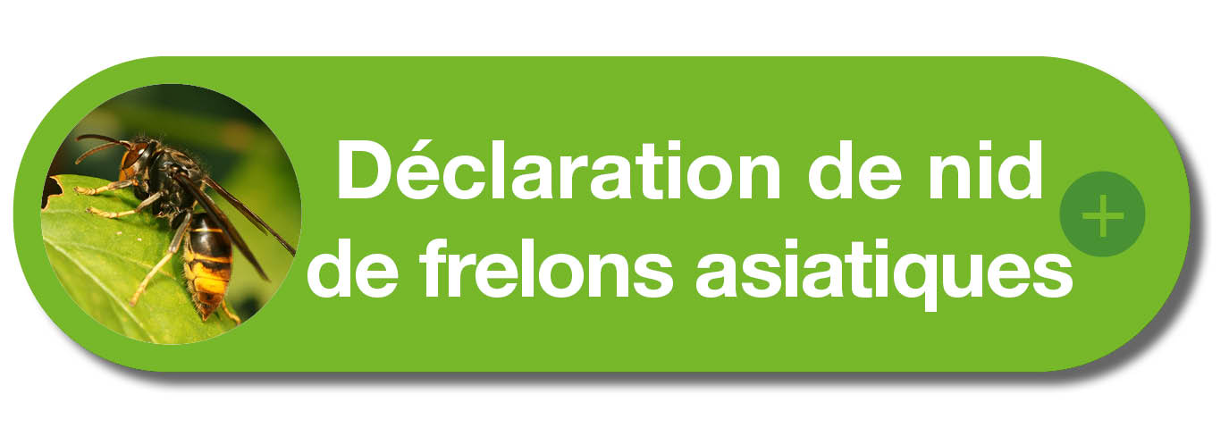 FRELONS ASIATIQUES.jpg