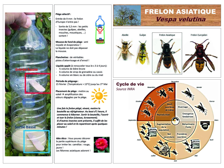 1Piege-frelon-03-19-2.jpg