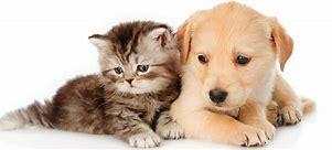 chien et chats.jpg