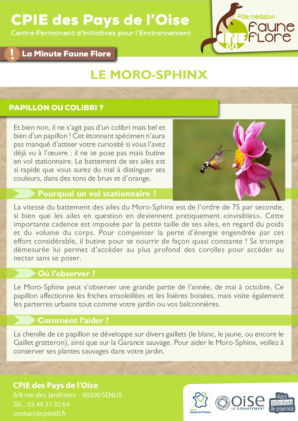 _2021_ Fiche MFF -07- morosphinx.png