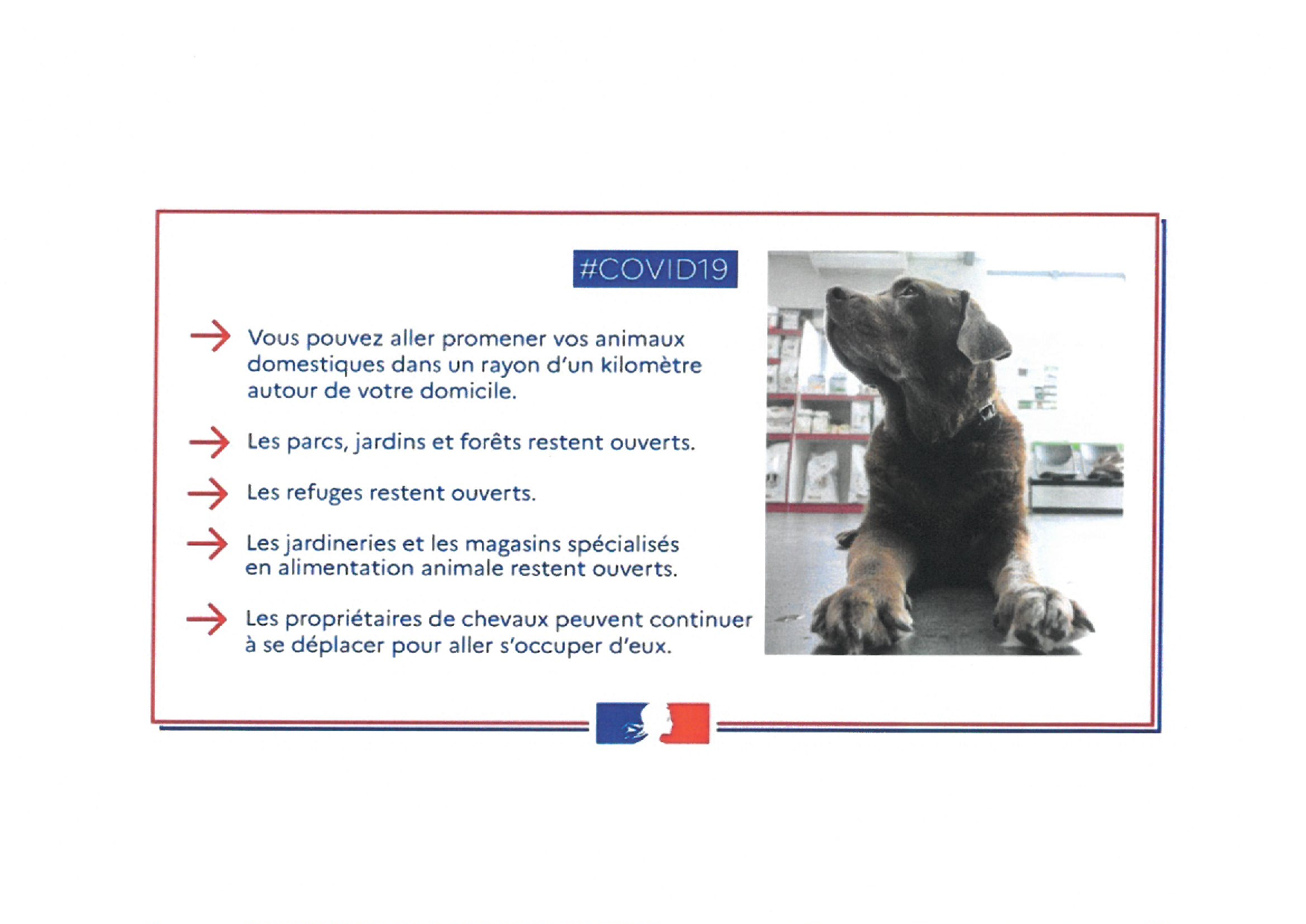 covid19 animaux.png