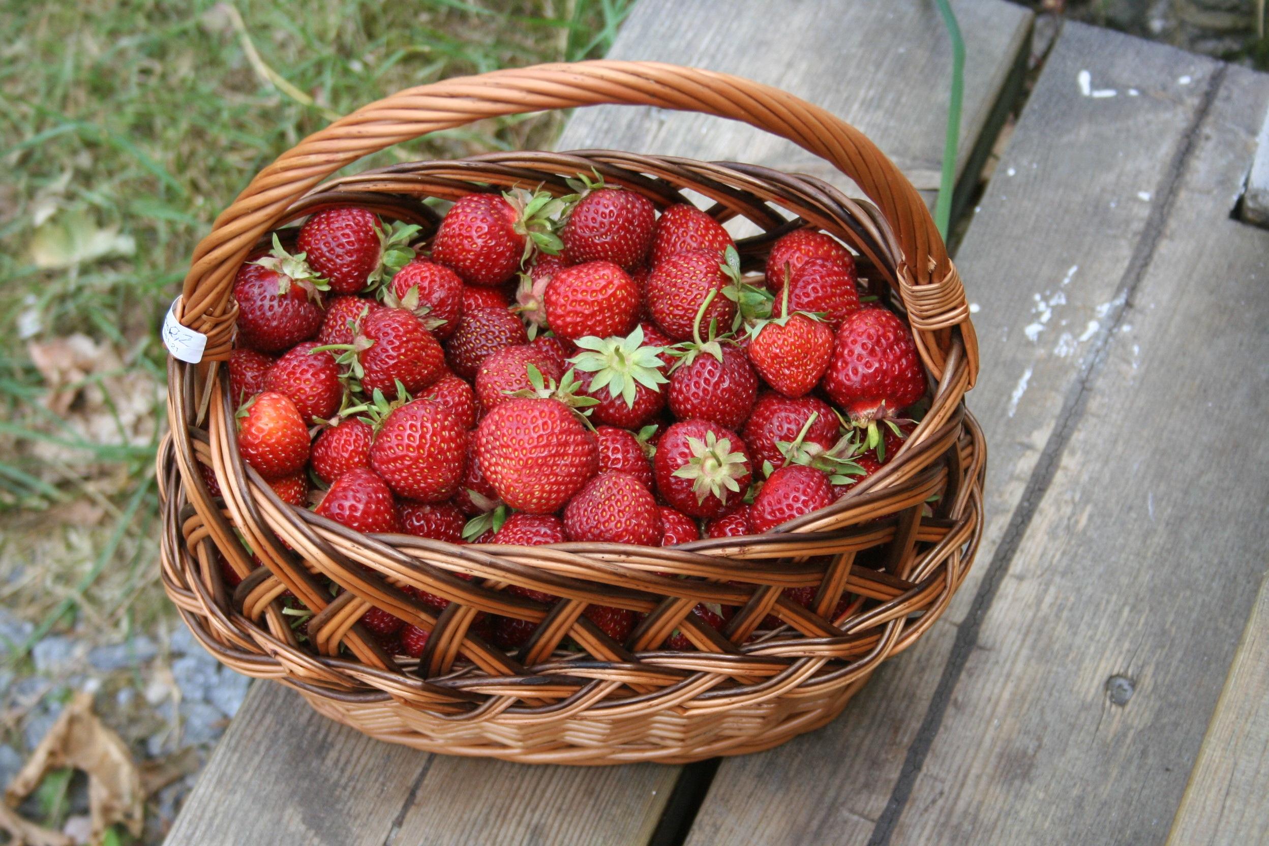panier-de-fraises.76028.jpg