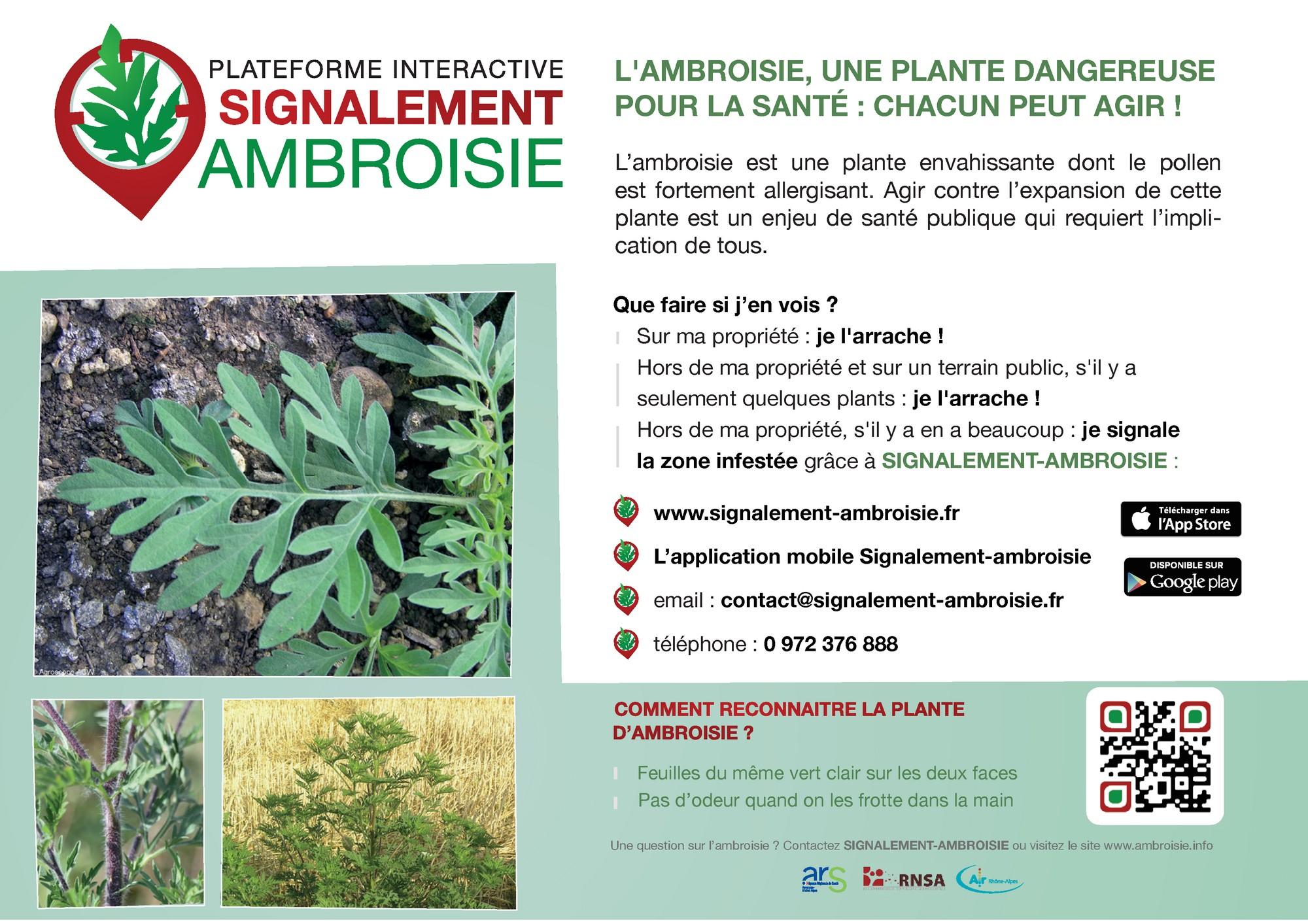 Ambroisie - Flyer _2 sur 2_.jpg
