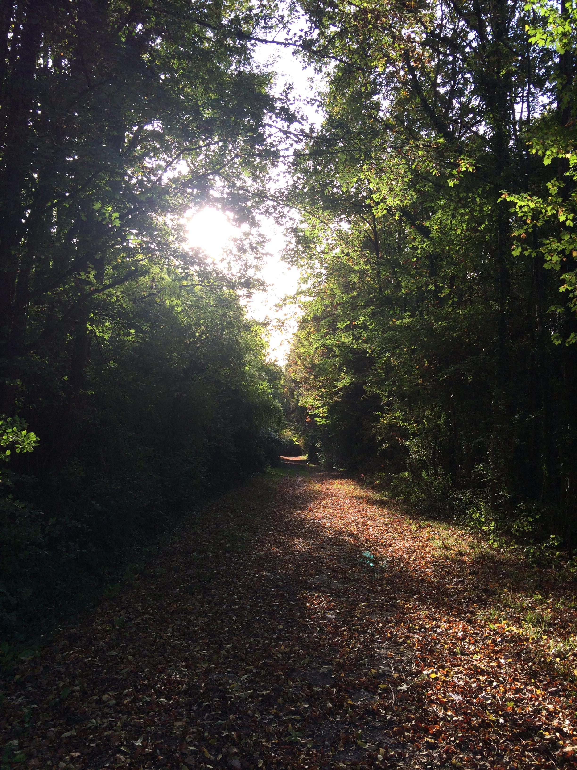 Chemin calme IMG_9058.JPG