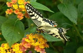 papillons 1.jpeg