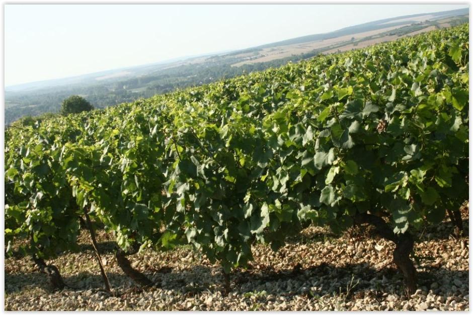 coteaux vignes