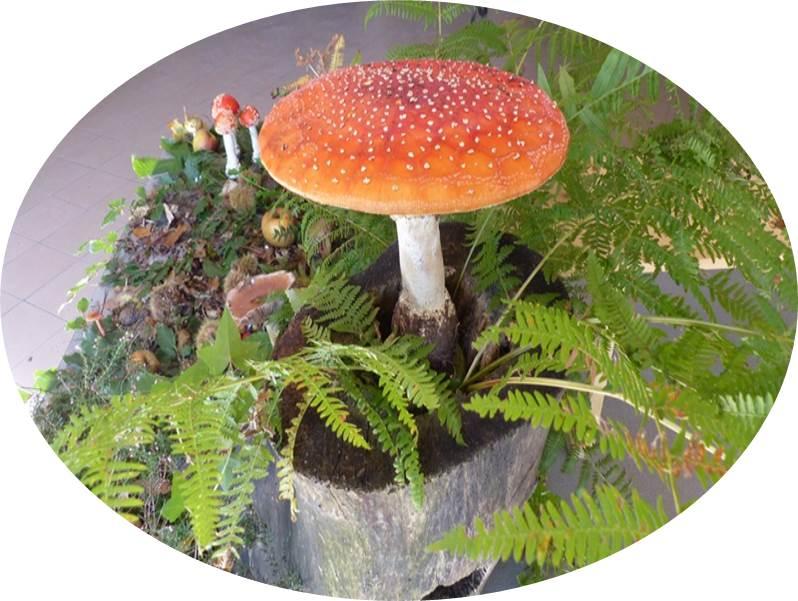 SMMA champignon.jpg