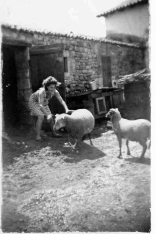 La Couarde Moutons.jpg