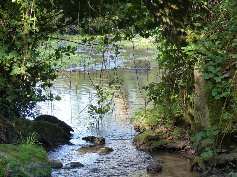 Pont naturel sur le Lambon.JPG