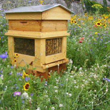 459-ruches.jpg