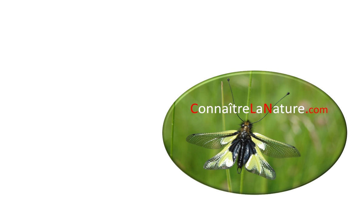 Groupe Mycologique de Cournon d'Auvergne