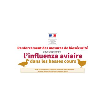 influenza aviaire 1.PNG