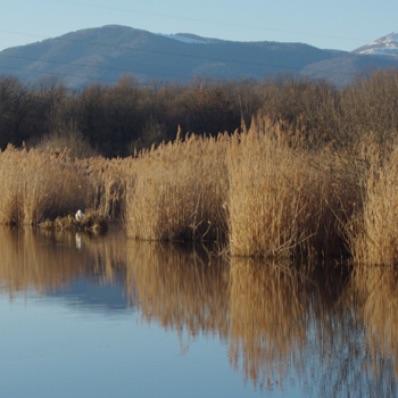 Réserve_naturelle_régionale_des_landes_et_marais_de_Rothmoos__la_roselière_du_Moos_.jpg