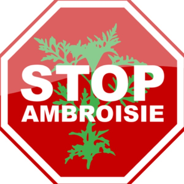 STOP AMBROISIE.png