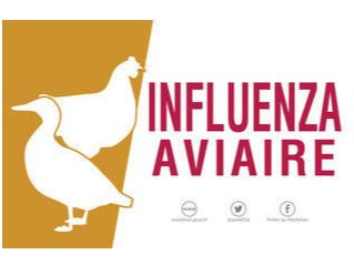 CP-Influenza-aviaire_large.jpg