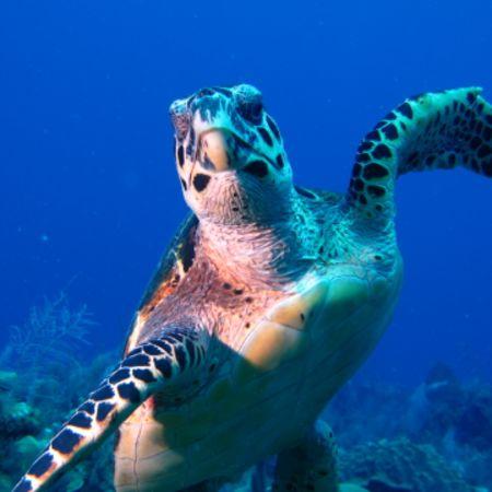 [Annulé] Soirée découvertes  subaquatiques